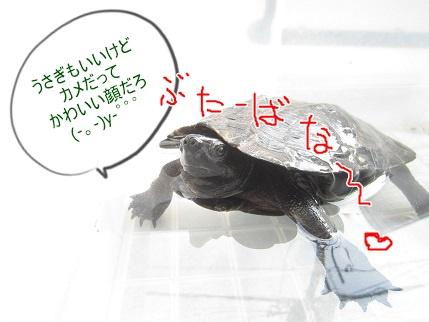 kamekichi20160322-2.jpg