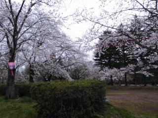 2015年04月19日 金ヶ崎08