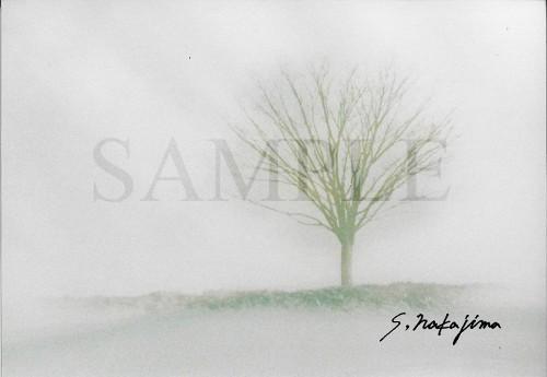 樹#003b