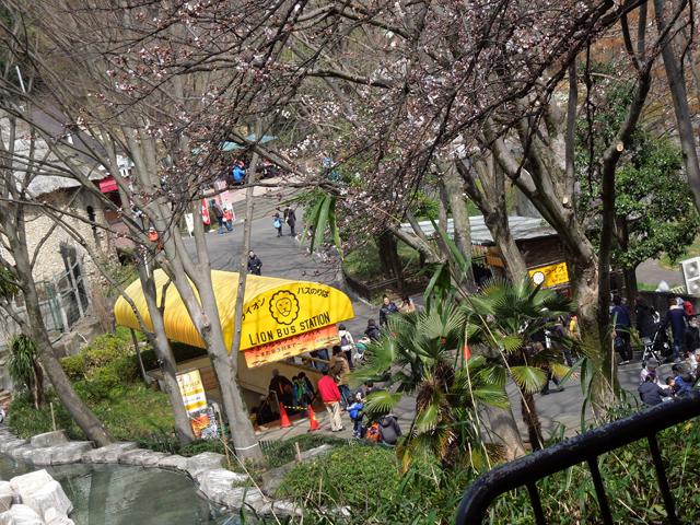 ライオンバス乗り場と咲き始めた桜