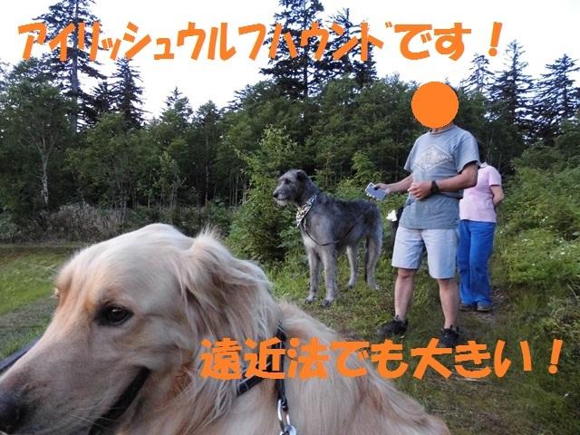 CIMG1523_P.jpg