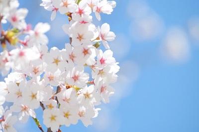桜382016