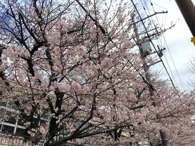 桜4220162