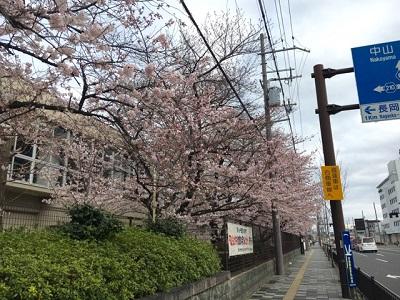 桜4220163