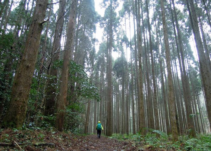 2016,1,11花切山-22