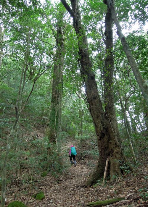 2016,1,11花切山-11