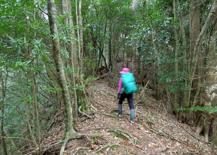 2016,1,11花切山-4