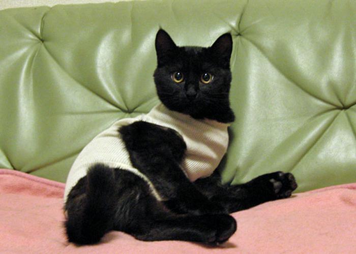 2016,1,23猫6