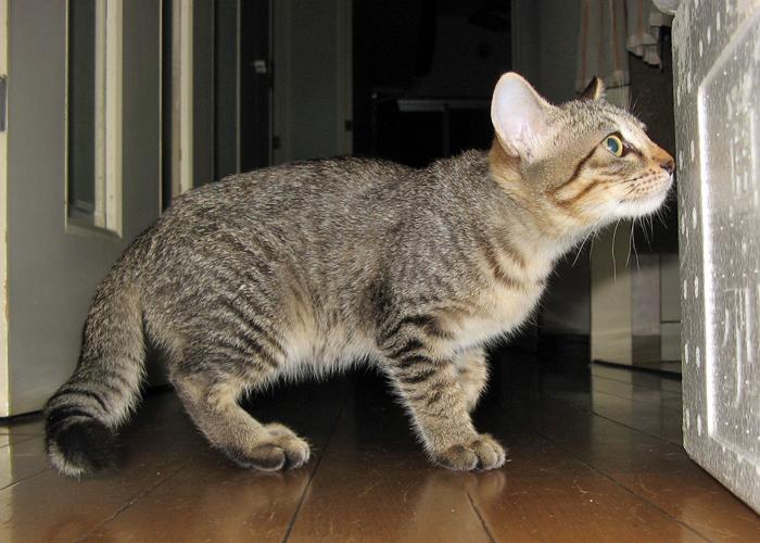 2016,1,23猫4