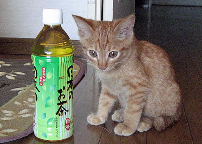 2016,1,23猫5