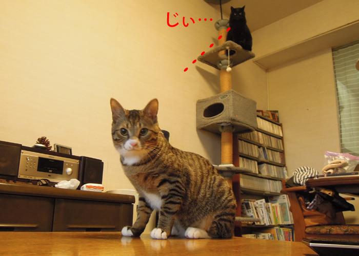 2016,2,14猫9