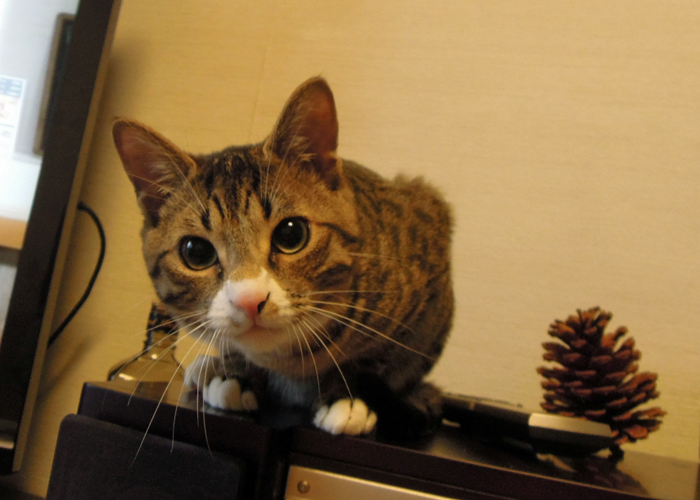 2016,2,14猫8