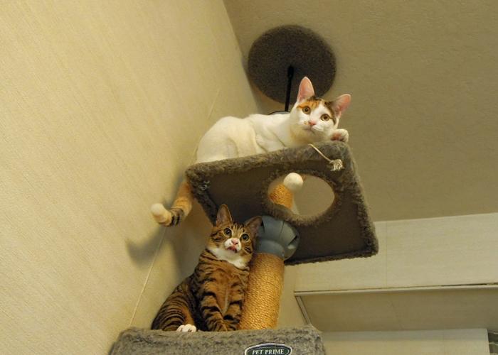 2016,2,14猫4