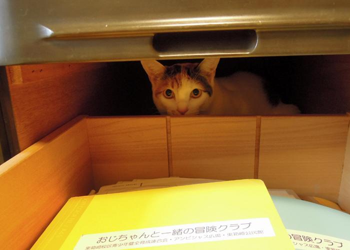 2016,2,14猫3