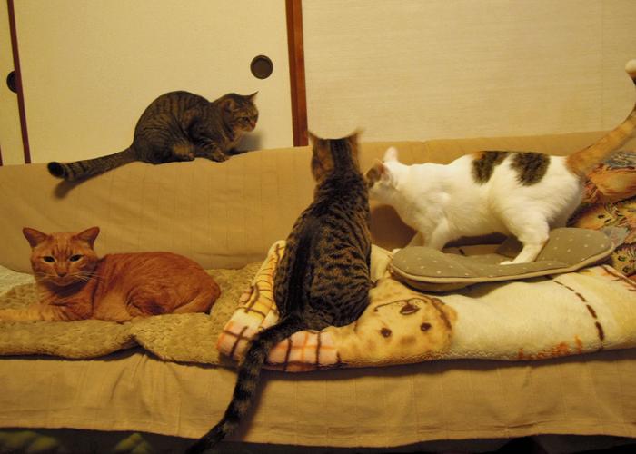2016,2,14猫1