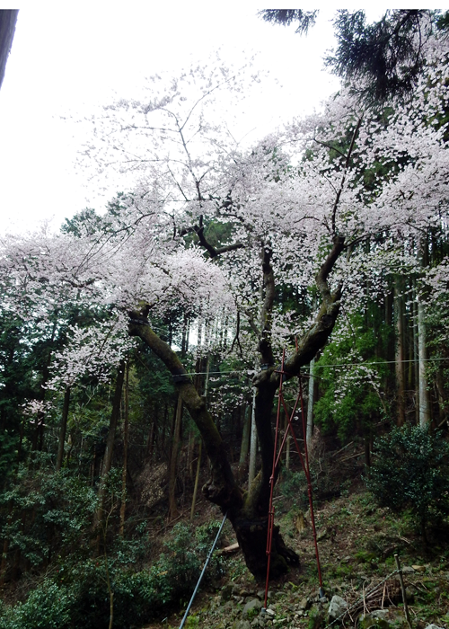 2016,4,3福智山-17