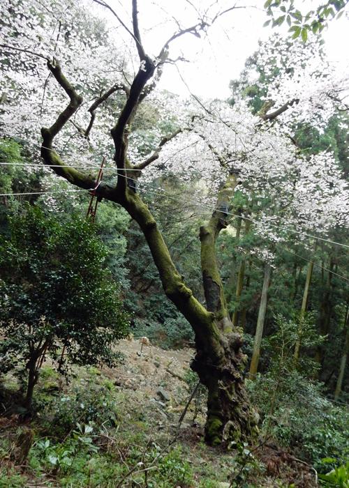 2016,4,3福智山-18