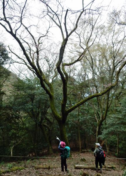 2016,4,3福智山-7