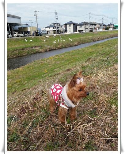 ヤギさんを見にIMG00421-20160224