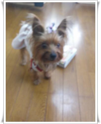 姫路にIMG00436-20160228