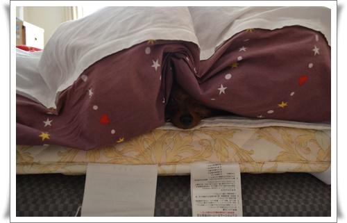 寝ているところを起こされてDSC_0737-20160304