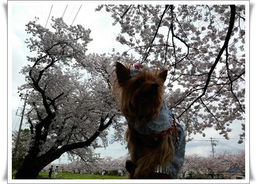 4月3日よたろうちゃんとIMG00707-20160403