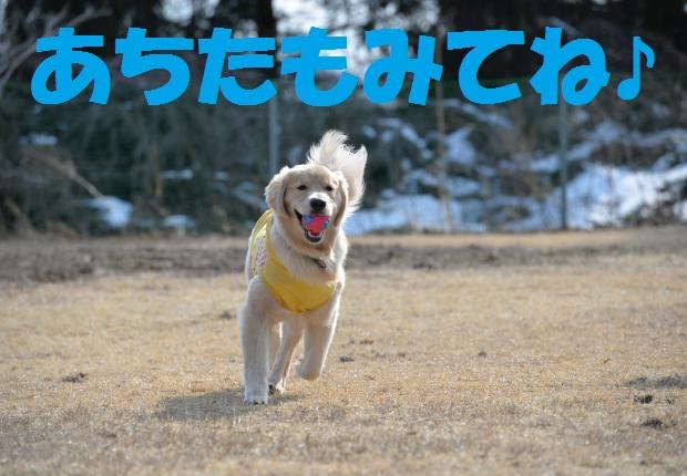 DSC_3194_convert_20160309145700.jpg