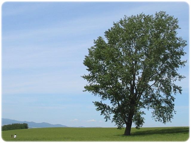 哲学の木 (1)