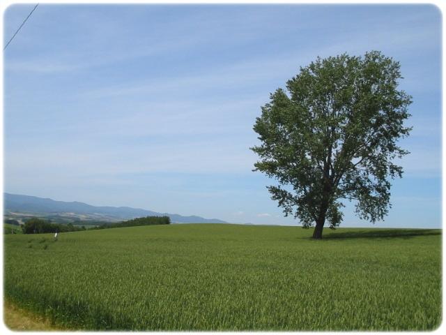 哲学の木---1