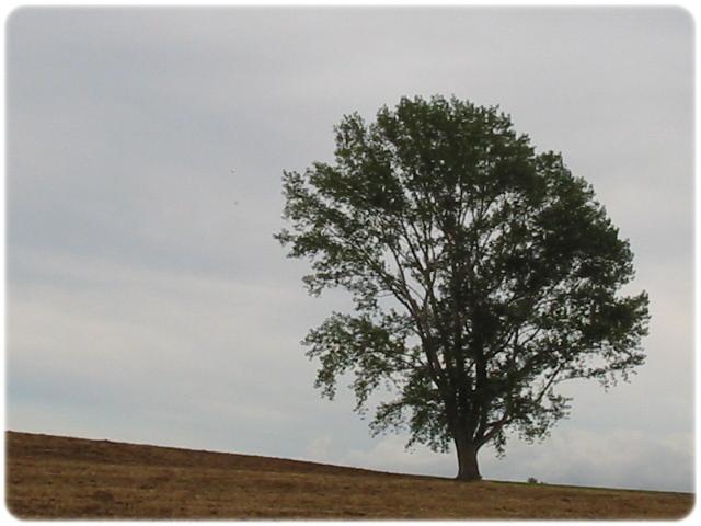 哲学の木---2