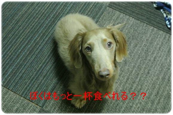 DSC_3762.jpg