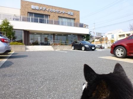 動物病院02272016ラーメン1