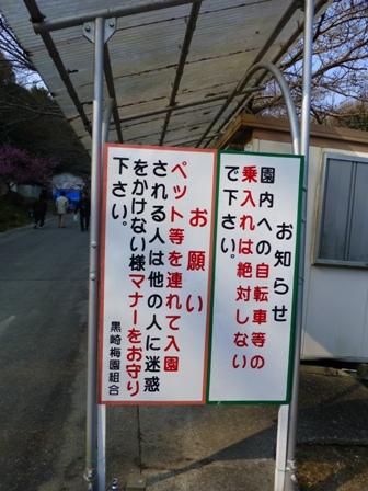 綾部山梅林5