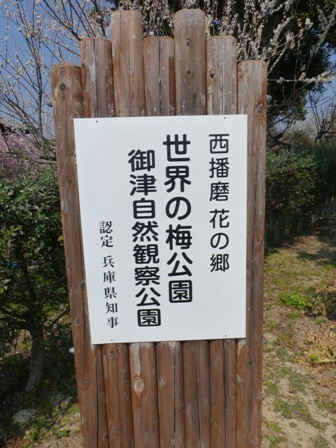 世界の梅公園7