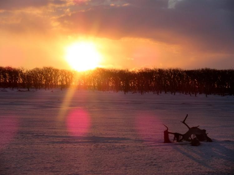夕陽1160206