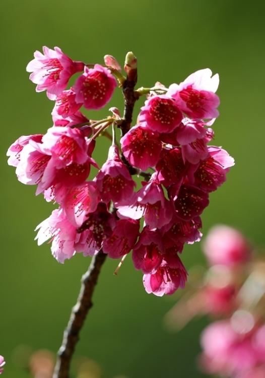 桜4160322
