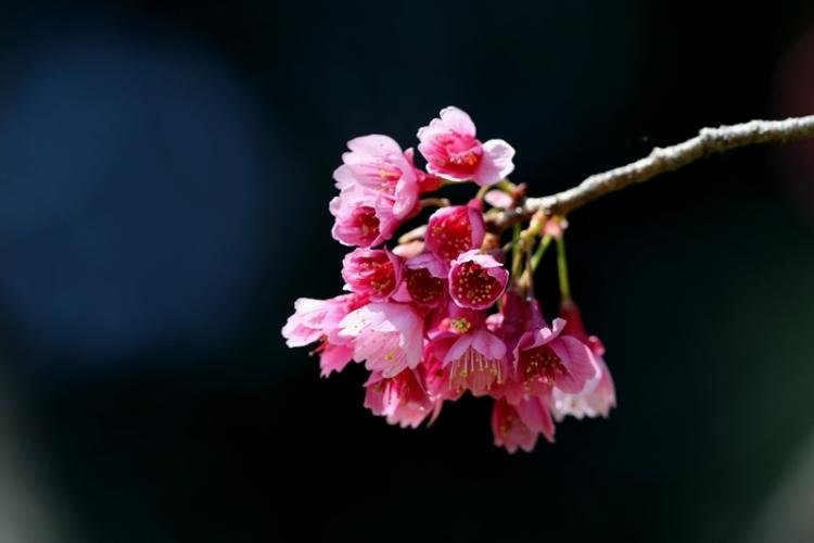桜5160322