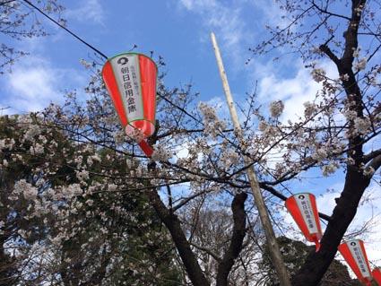 1上野公園2分咲き