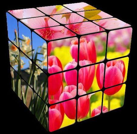 春の花キューブ