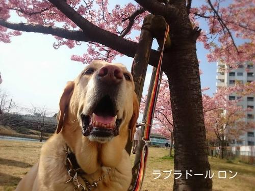 20160307 決めた子記念日 記念撮影 2016春