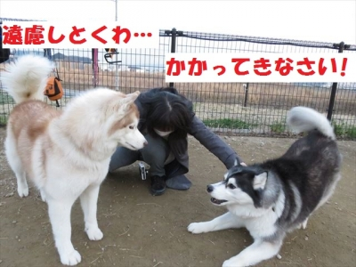 IMG_5052_R.jpg