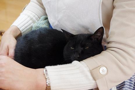 黒猫ミアは今日も甘えん坊