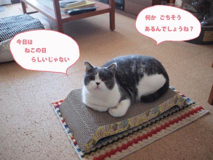 今日は猫の日!