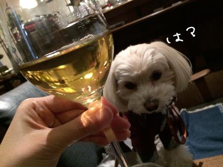 白ワインとらっくん