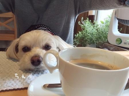 コーヒーとブータレらっくん