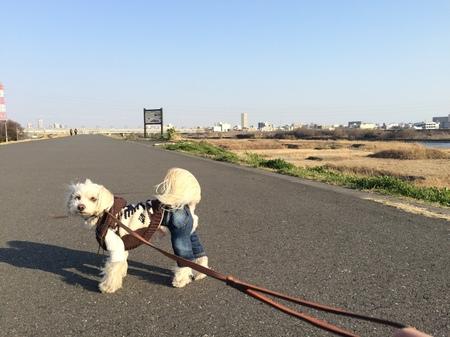 河原のお散歩
