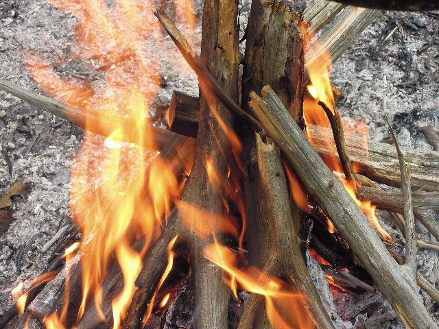 ヒノキの薪