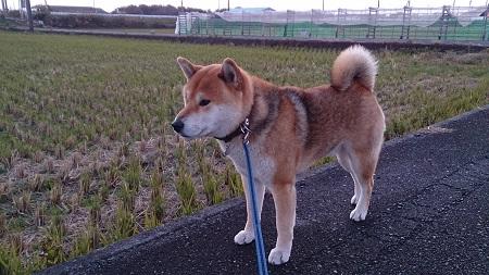 翔 2015.12.13-1