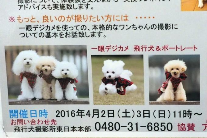 blogP3267779-2.jpg