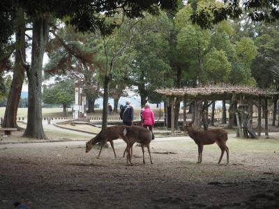 なら公園鹿